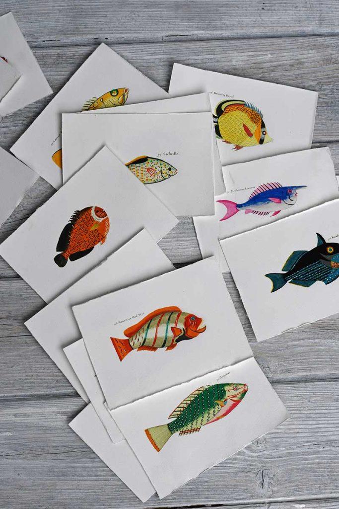 Rainbow fish display postcards