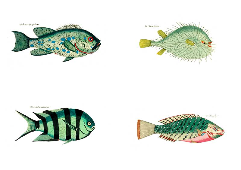 Green rainbow fish picture for rainbow display