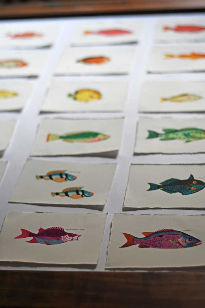 Playing around with fish gallery wall