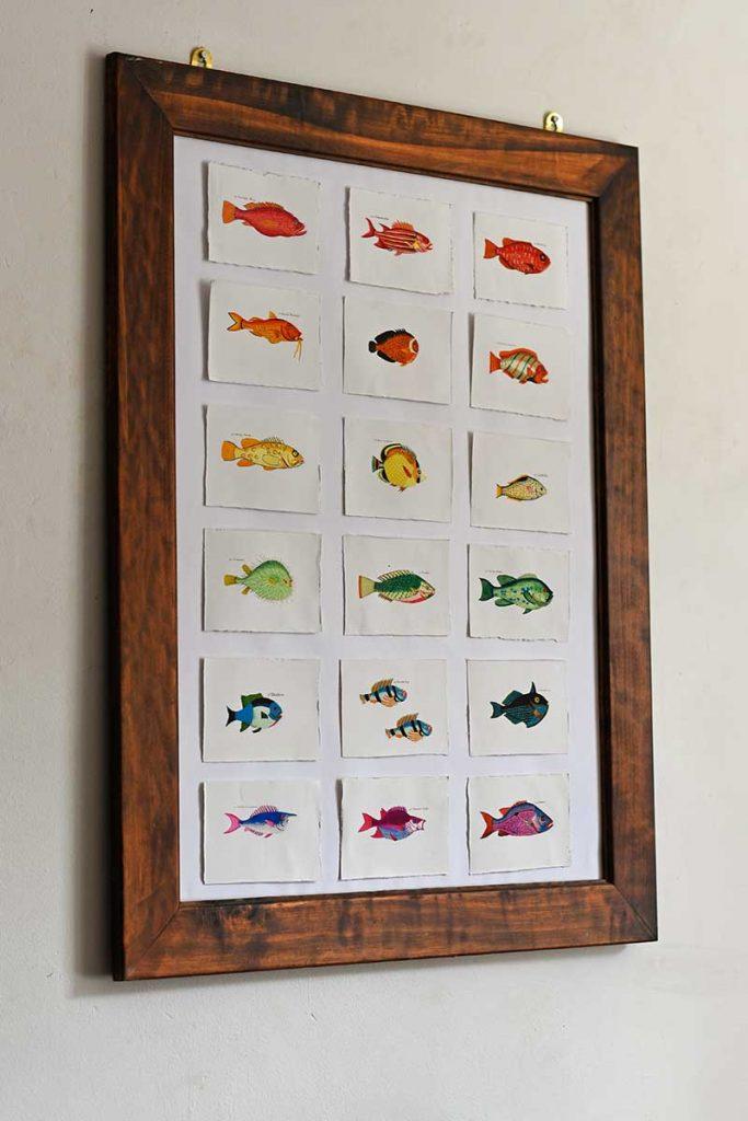 Vintage rainbow fish display