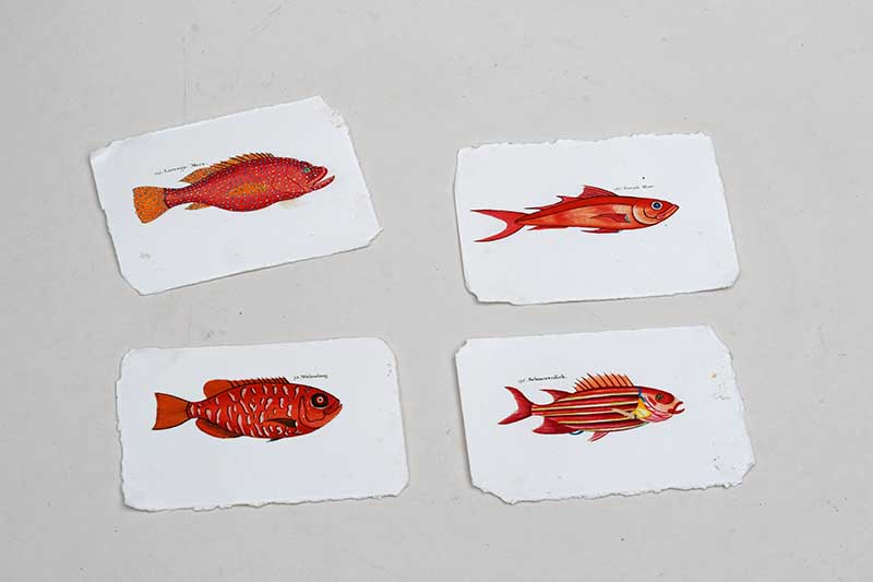 Torn fish pictures