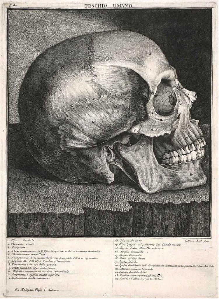 vintage human skull drawings.