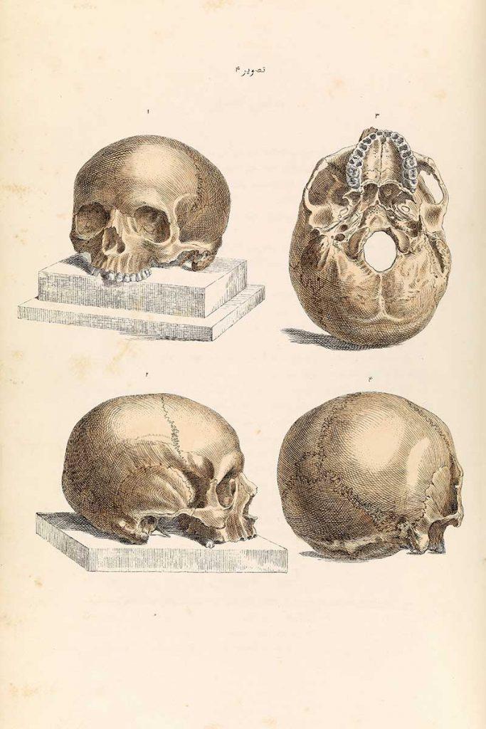 4 human skull drawings
