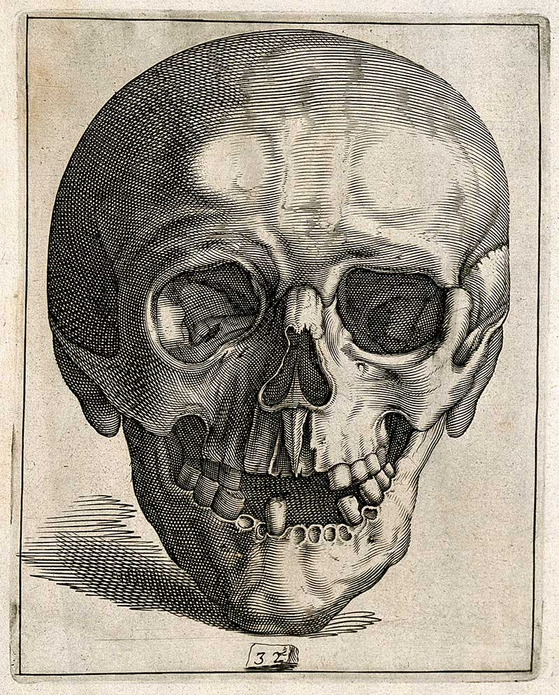 Human Skull drawing anterior