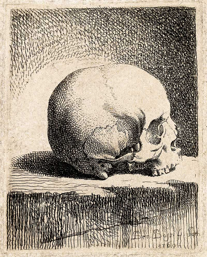 Skull Lateral View