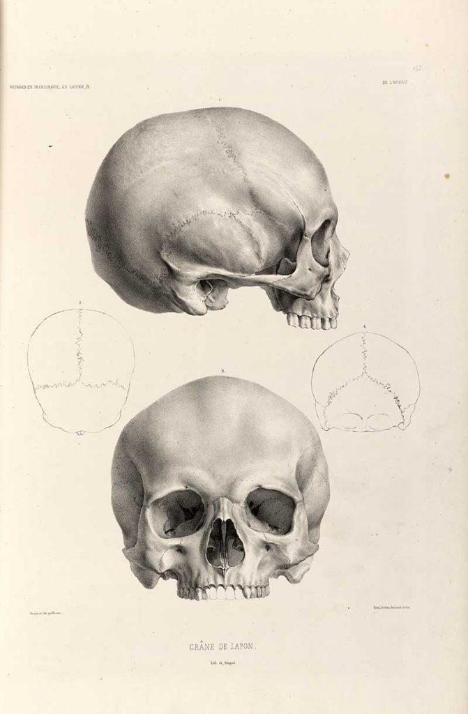 human skull drawings