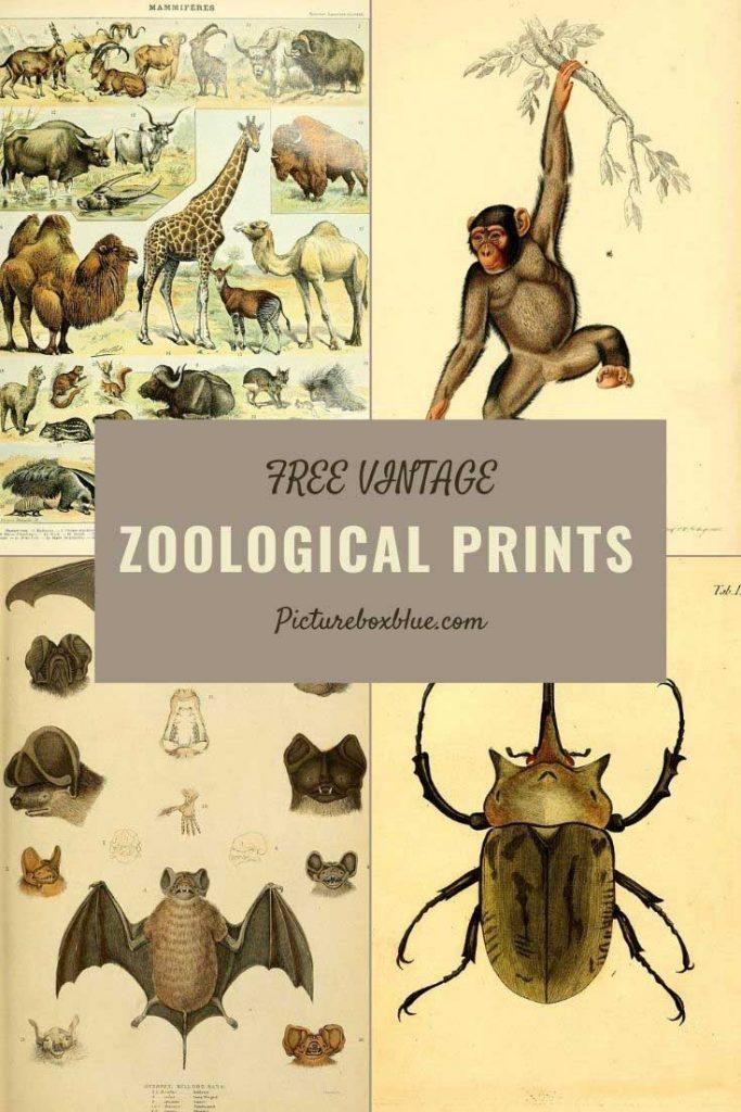 Free vintage zoological illustrations