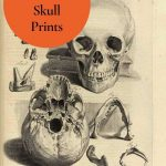 Halloween Skull Prints
