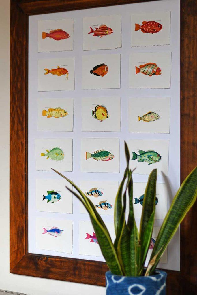 rainbow fish display