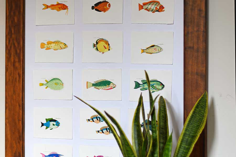 rainbow fish display