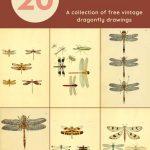 20 free dragonfly prints