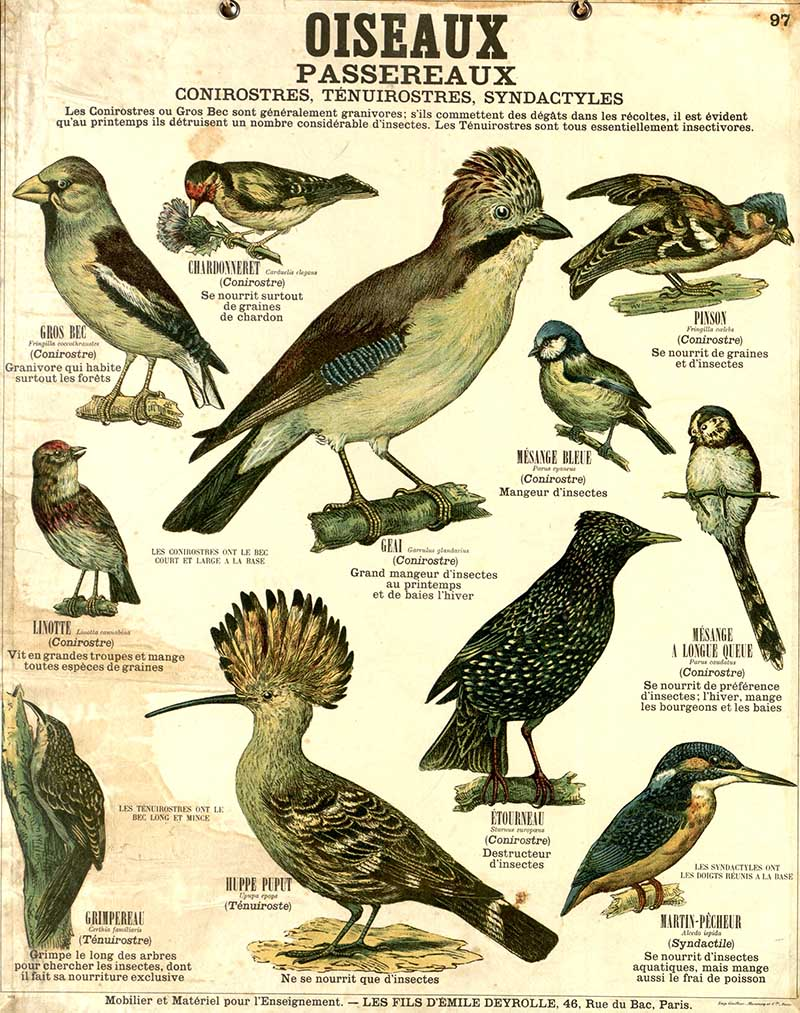 Oiseaux 2 birds