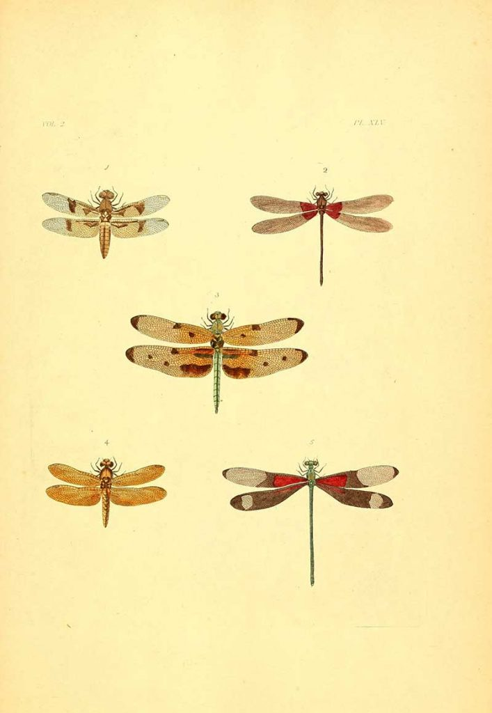 dragonfly paintings
