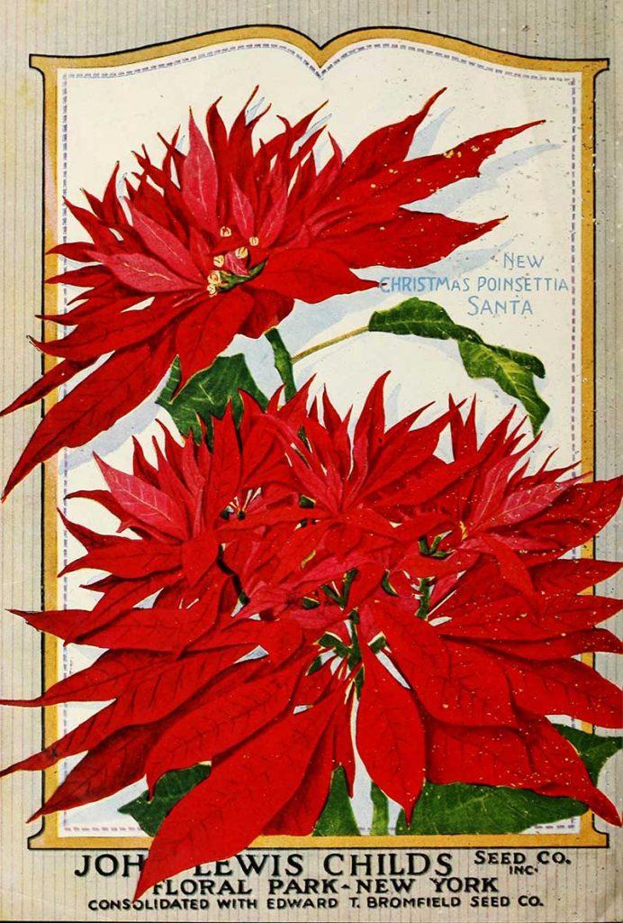 Christmas Flower catalog cover