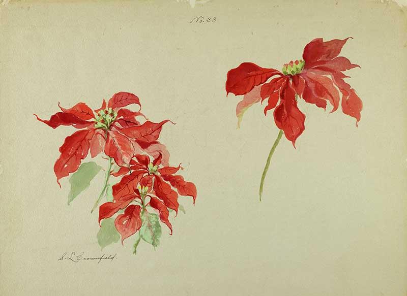 watercolor Poinsettia