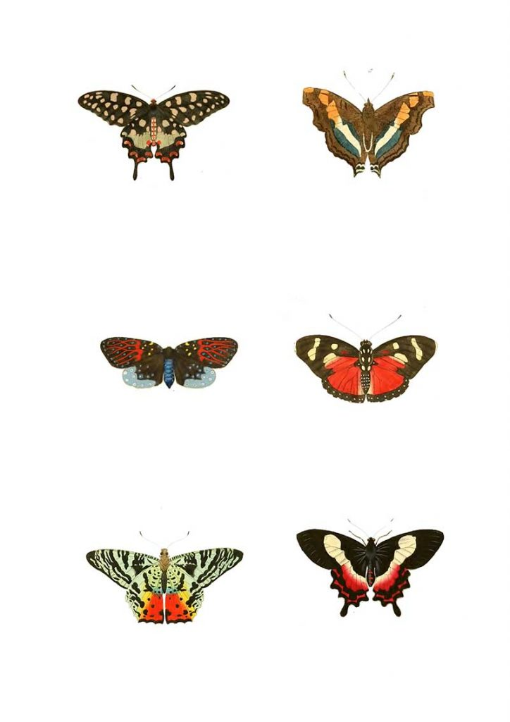 Butterfly images one