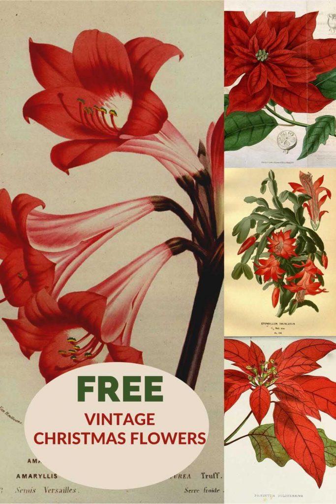 free-vintage -Christmas-flower-drawings
