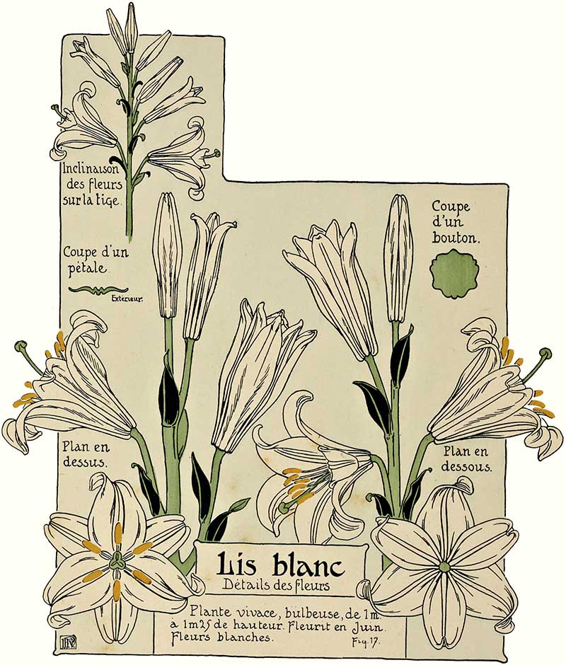 art nouveau lily