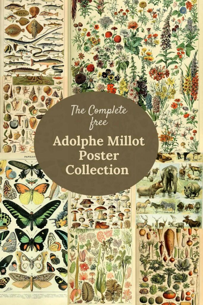 the complete Adolphe Millot collection