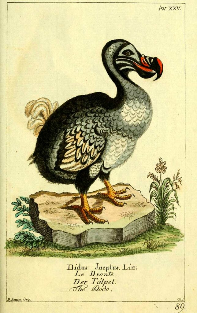 1780 German Dodo drawing