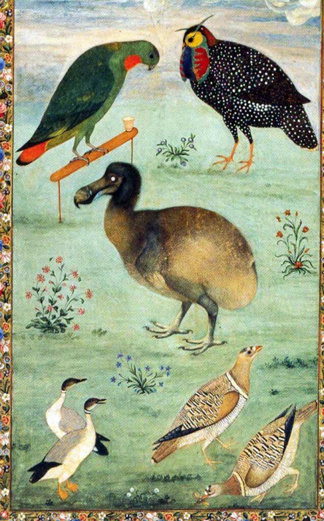 Mansur Dodo
