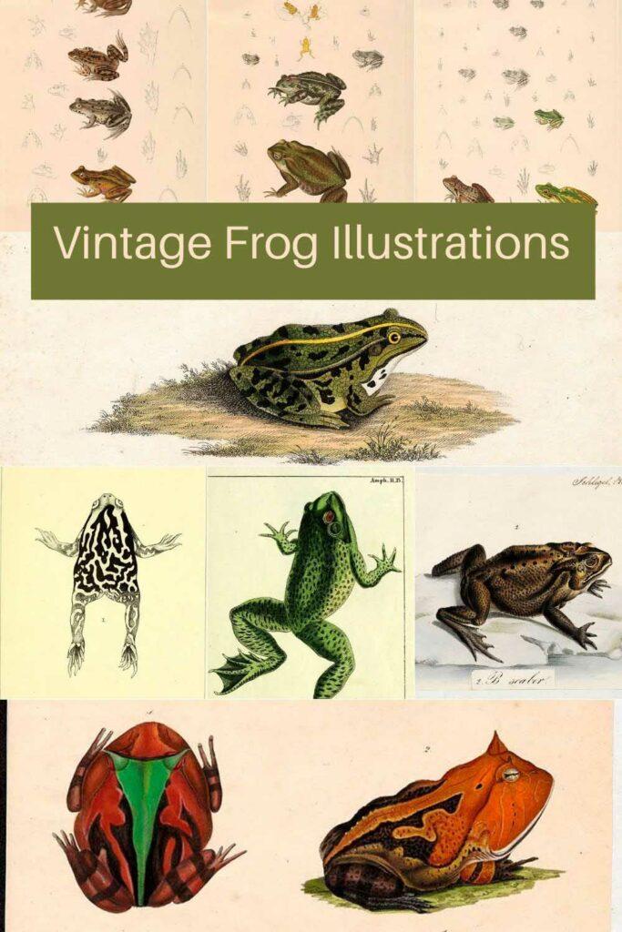 vintage_frog_toad_illustrations