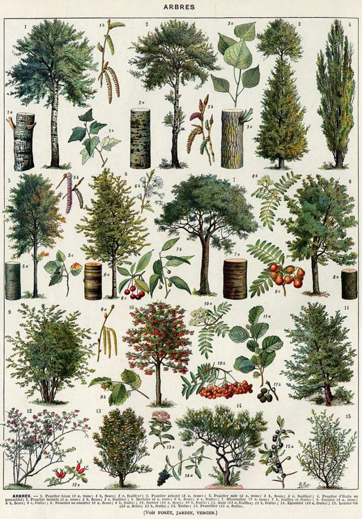 Trees in color Larousse