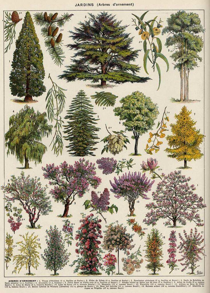 Ornamental Tree posters