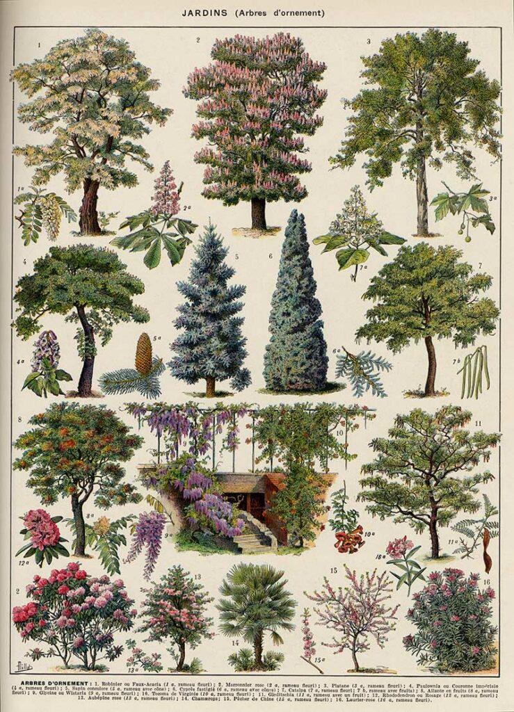 Ornamental Tree Poster 2