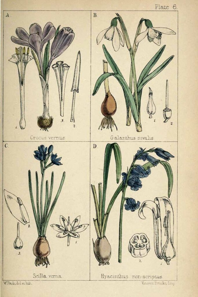 Bluebells and other British wildflowers