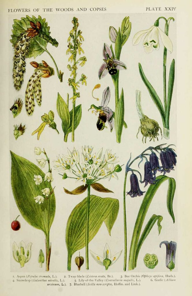 flowers of the woods and copses s
