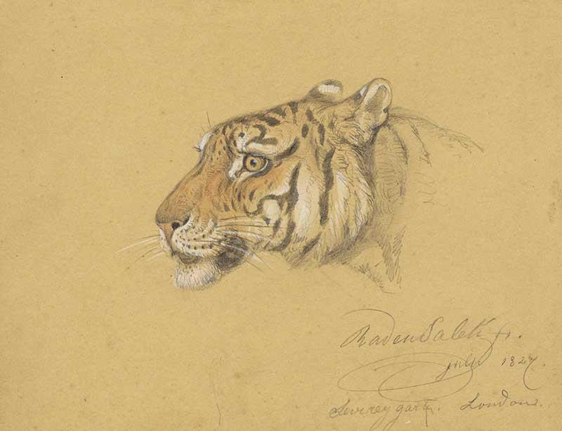 Head of a tiger 1827