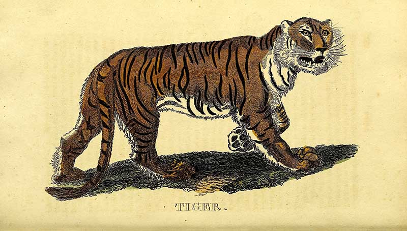 The natural history of quadrupeds