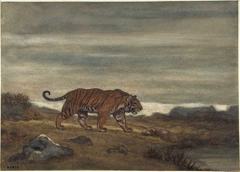 tiger approaching pool watercolor