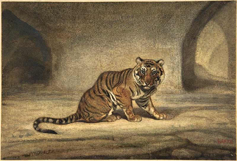 tiger watercolor 19th Century