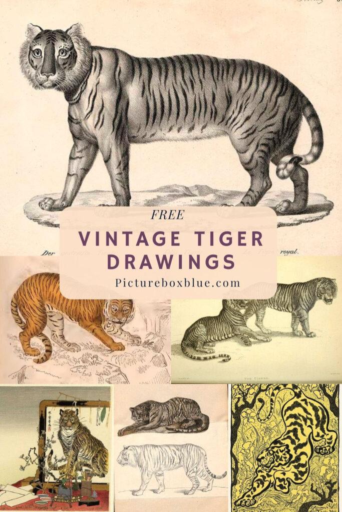 free-vintage-tiger-drawings