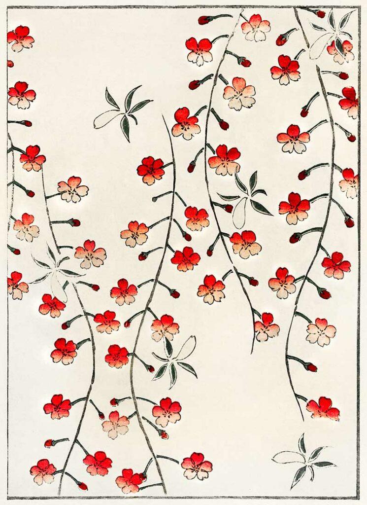 Cherry Blossom Watanabe Seitei