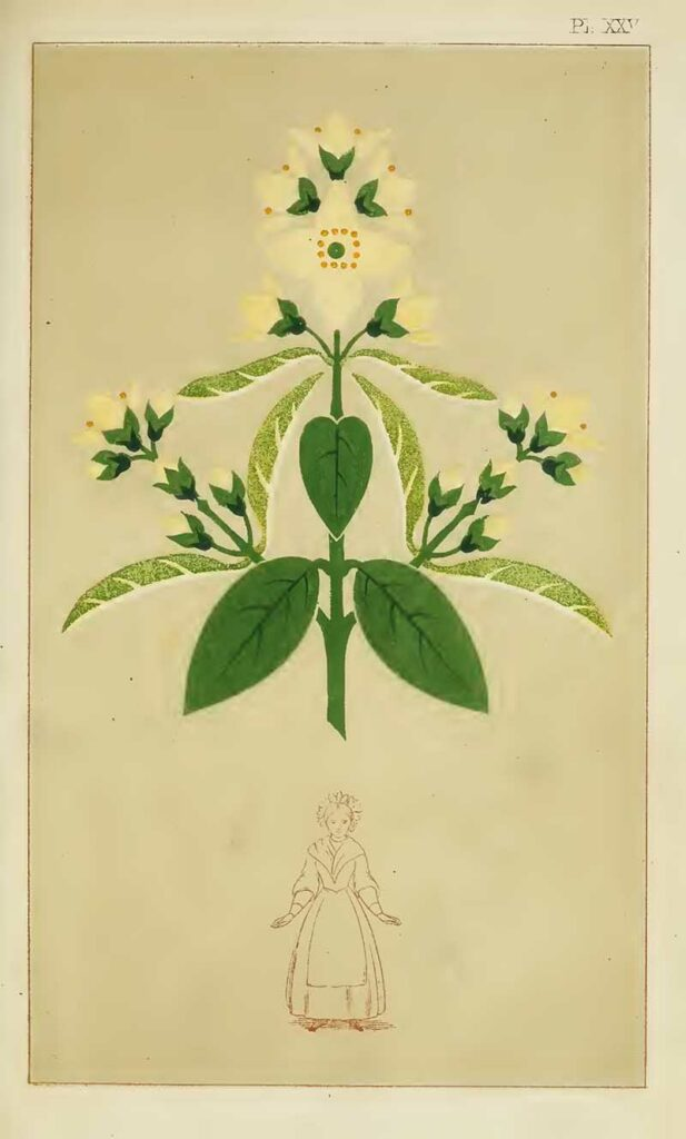 Christopher Dresser print woman and flower
