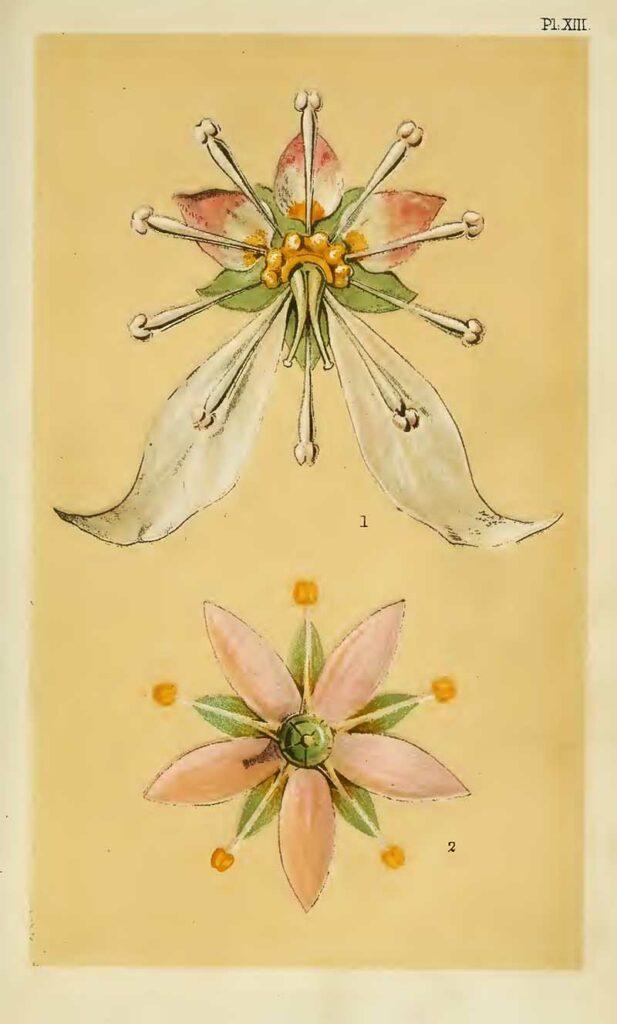 Christopher Dresser Decorative-flowers