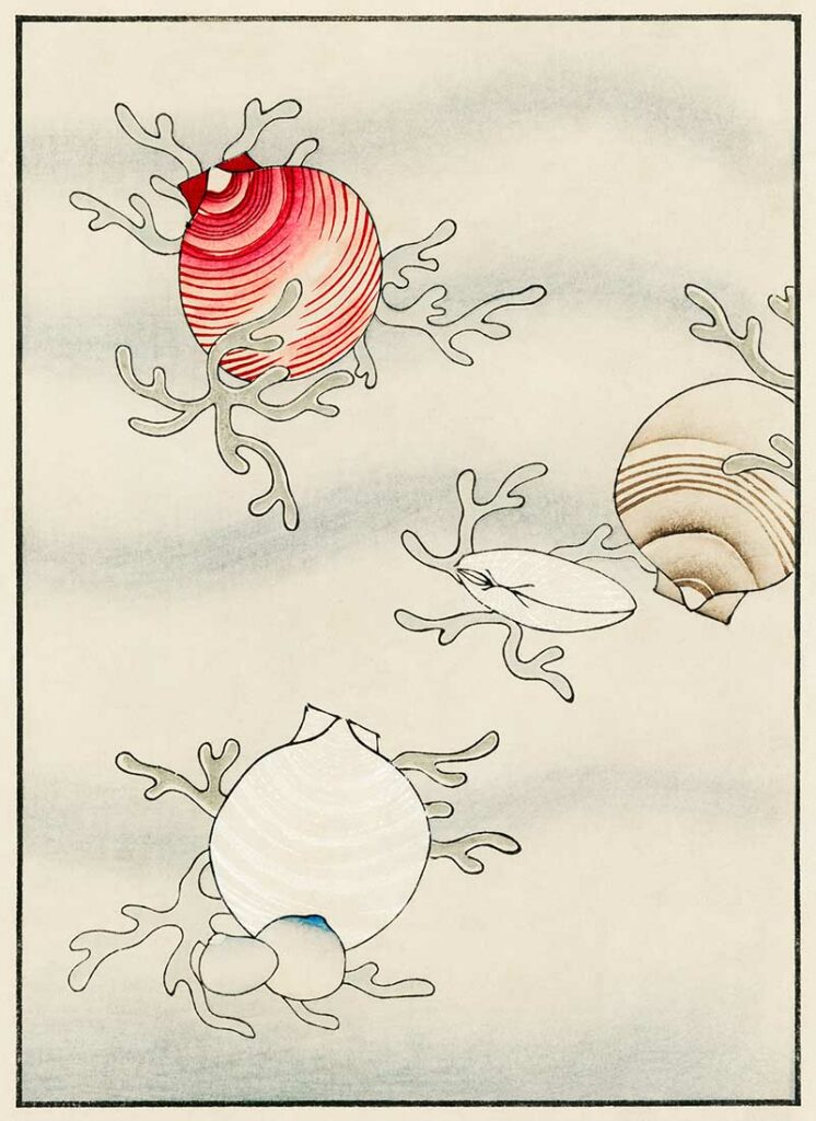 Sea Shells_Bijutsu_Sekai_by_Watanabe_Seitei