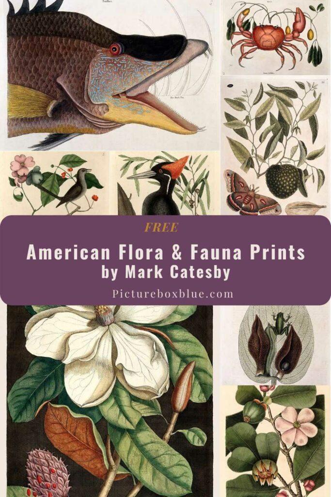 Free Mark Catesby Prints