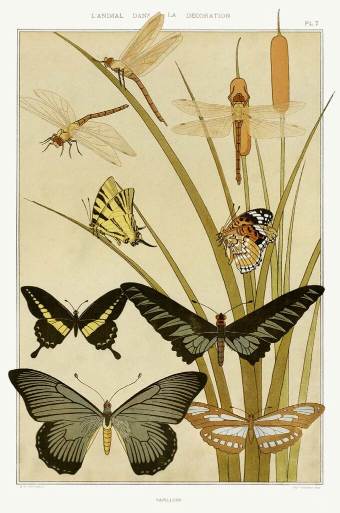 Papillons by Maurice Pillard Verneuil.