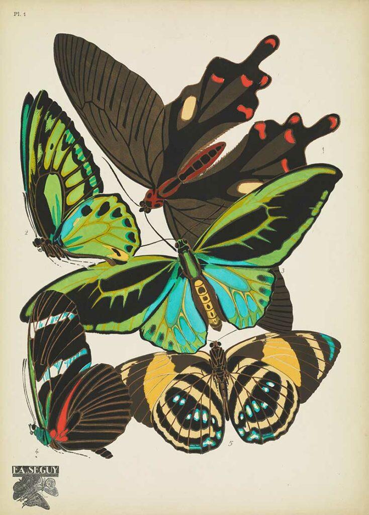Emile-Allain Séguy Pochoir Prints of Antique Butterflies