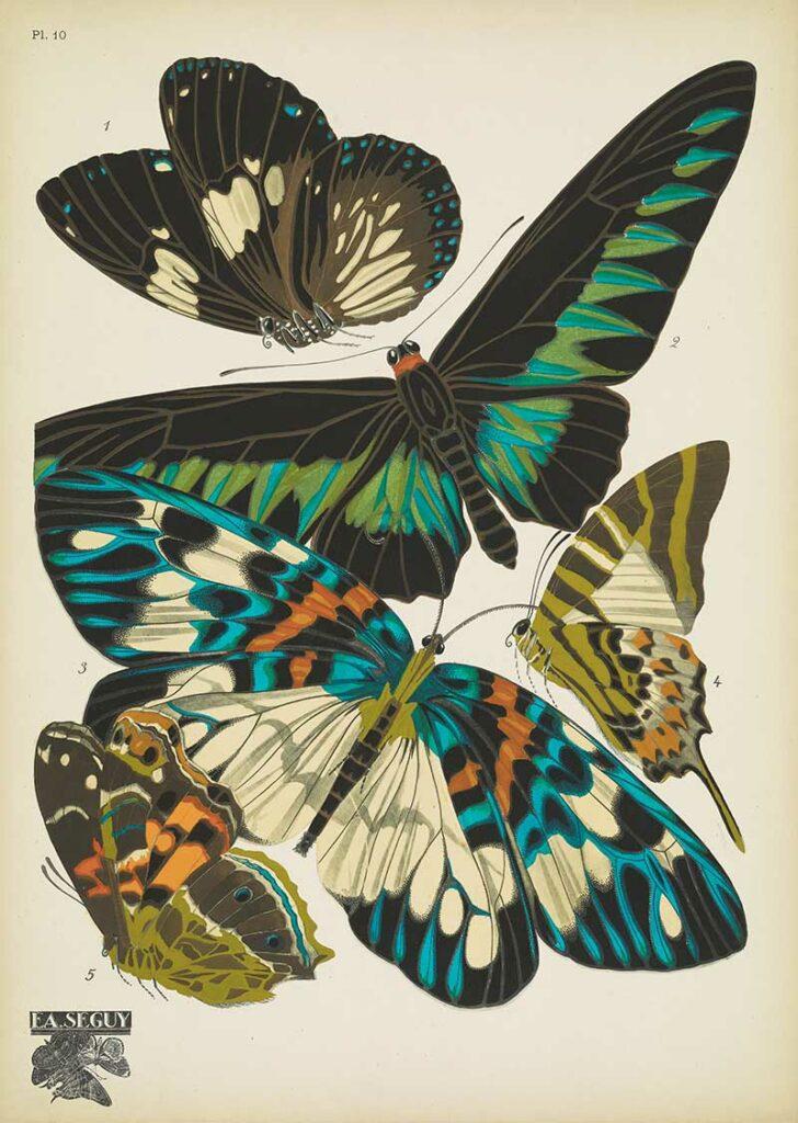 Pochoir Butterfly prints