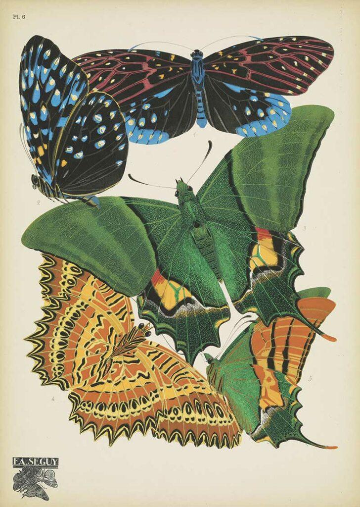 Papillons-pochoir print