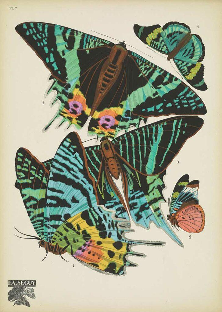 Papillons-pochoir print 7