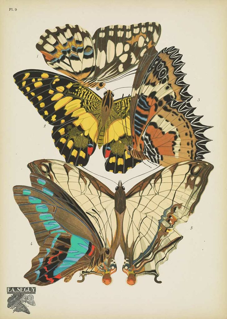 Antique butterfly print 9