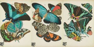antique-butterfly-prints