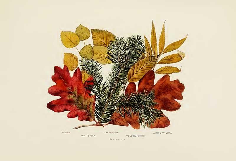 vintage fall leaf print