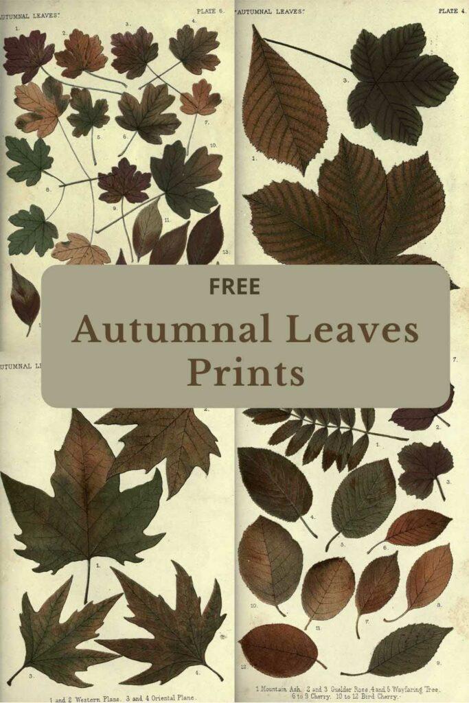 Autumn leaves charts